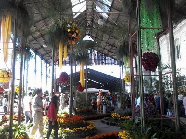 1-Asociación de Productores de Plantas Ornamentales de Jujuy (APPOJuy)