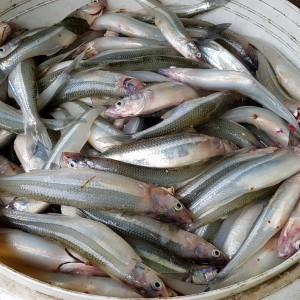 2da Fecha del Torneo Anual que organiza el Club de Pescadores de la Ciénag