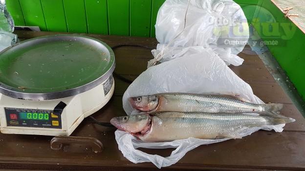Concurso de pesca pejerrery – Dique Las Maderas 3
