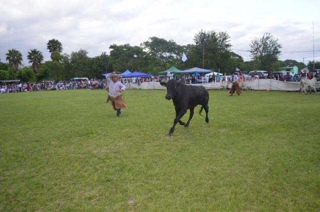 EXITOSO FESTIVAL PROVINCIAL DEL PEJERREY EN EL CARMEN (26)