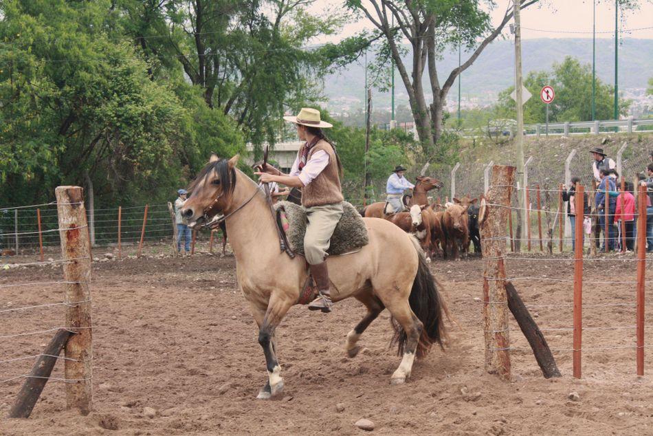 Exposición de Caballos Criollos2