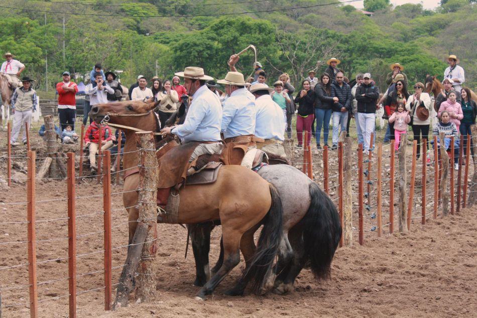 Exposición de Caballos Criollos4