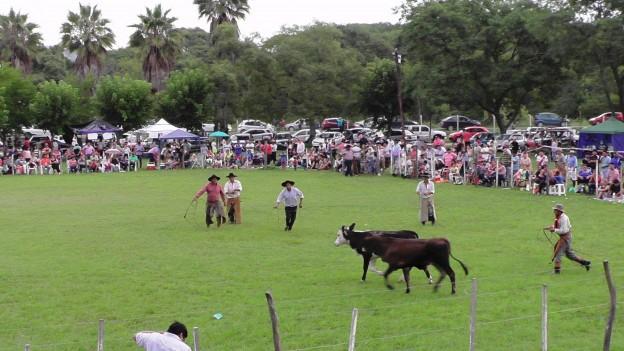 FESTIVAL DE LOS DIQUES (11)