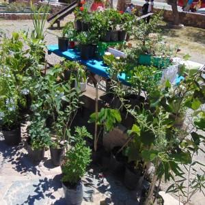 Tumbaya realizó la Primer Feria del Ciclo Agrícola denominada Del campo a tu mesa (16)