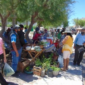 Tumbaya realizó la Primer Feria del Ciclo Agrícola denominada Del campo a tu mesa (6)