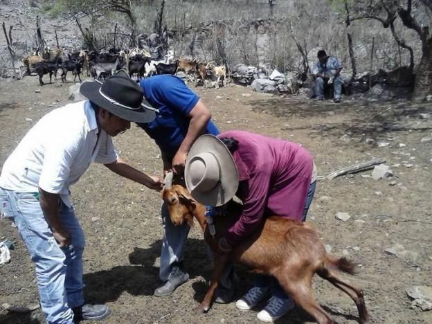 capacitación y asistencia a productores rurales en la jurisdicción de Yala
