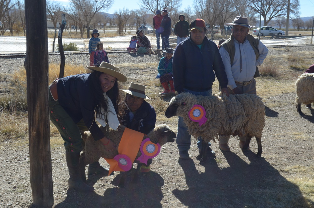 premiacion de reproductores ovinos